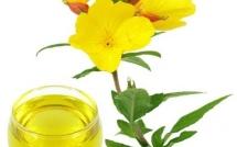 10 thảo dược tốt nhất để giảm đau