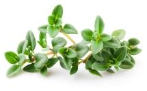 PGS.TS. Nguyễn Duy Thuần giải đáp thắc mắc bạn đọc về cây cỏ Xạ Hương trong điều trị viêm đường hô hấp ở trẻ nhỏ